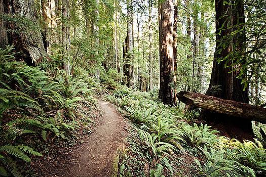 Scott Pellegrin - Trail in the Redwoods