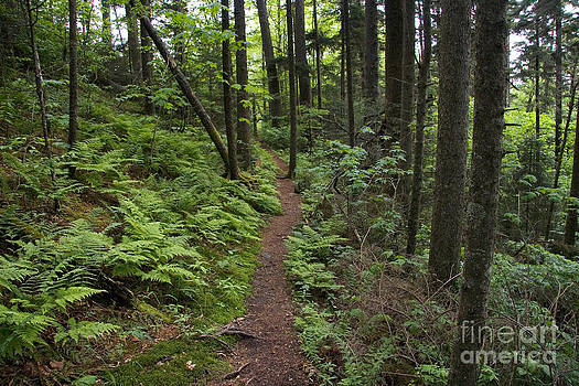 Jonathan Welch - Trail