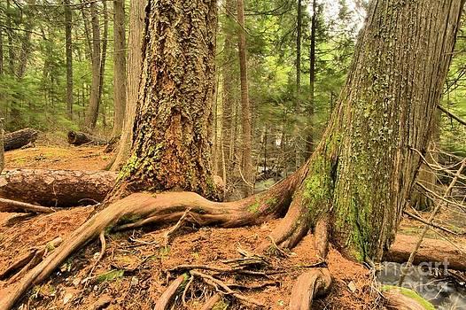 Adam Jewell - Trail Of The Cedars