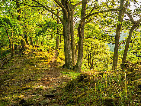 Trail through an oak forest - Germany by Martin Liebermann