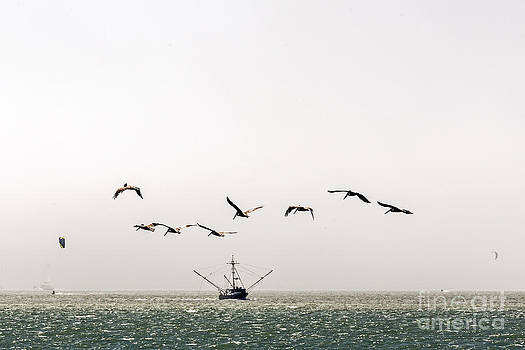 Kate Brown - Trawler and Pelicans