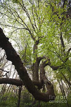 Jonathan Welch - Tree 1
