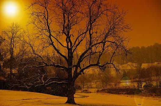 Tree 2 by Fernando Cruz