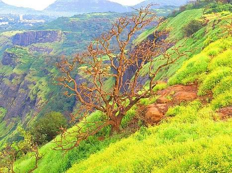Tree by Adil