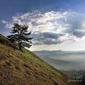 BERNARD JAUBERT - Tree and misty landscape