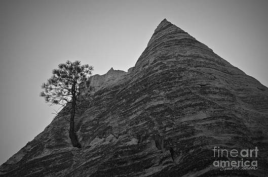 Dave Gordon - Tree and Sandstone Peak BW