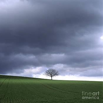 BERNARD JAUBERT - Tree and stormy sky