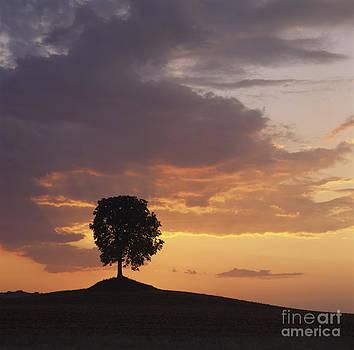 BERNARD JAUBERT - Tree at sunset