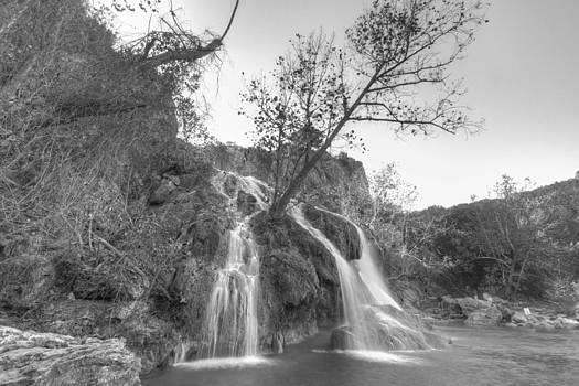Tree at Turner Falls by Nathan Hillis