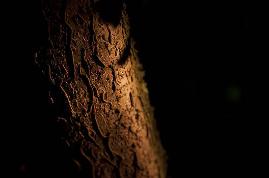 Tree bark by David Isaacson