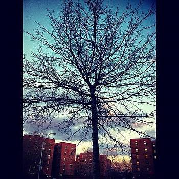 #tree #branches #fall #buildings by Shawn Who