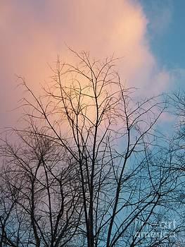 Judy Via-Wolff - Tree Cloud