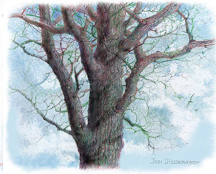 Tree - colored pencil by Jim Hubbard