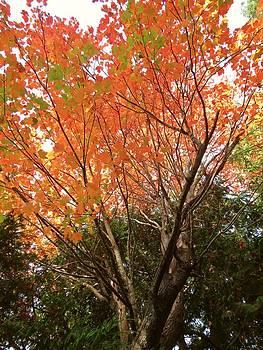 Tree Dance 1 by Anne Sterling
