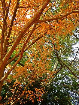 Tree Dancer by Anne Sterling