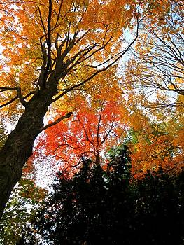Tree Dancing by Anne Sterling