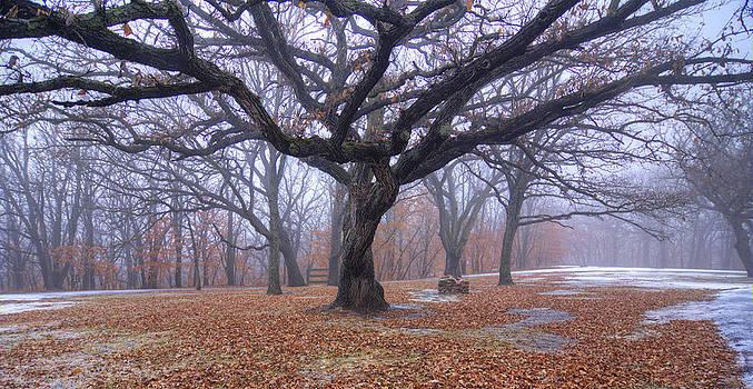 Tree by Dustin Miller