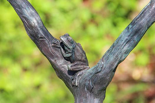 Tree Frog by Laurel Butkins