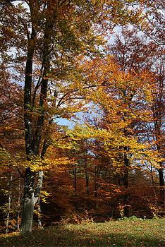 Bogdan M Nicolae - Tree in Autumn Light