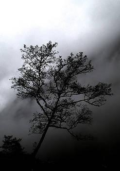Tree In Mist by Tyler Lucas