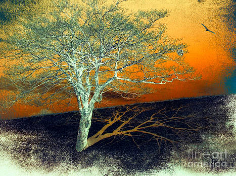 Dan Carmichael - Tree in Snow in the Blue Ridge II