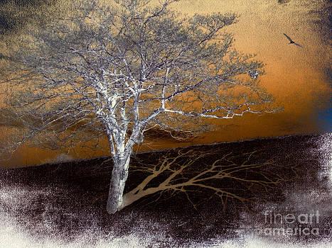 Dan Carmichael - Tree in Snow in the Blue Ridge III