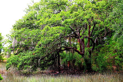 Tree in the Marsh by Kay Mathews