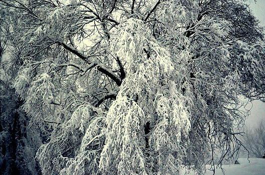 Tree by Karen Kersey