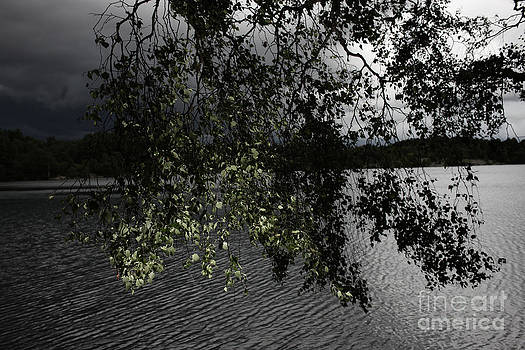 Tree leaves by Sanjay Deva