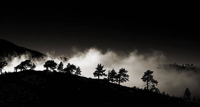 Tree line against the fog by Kim M Smith