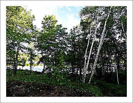 Tree Lined Lake by Dianne  Lacourciere
