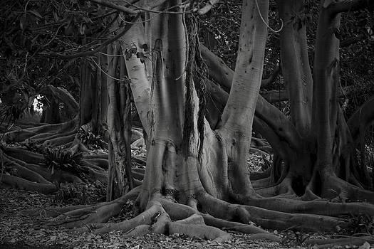Tree by Mark DeJohn