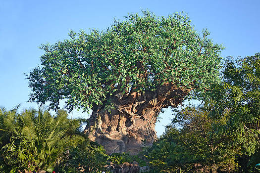 Tree Of Life by Harold Shull