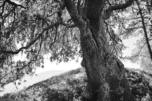 Paulette Thomas - Tree of Life