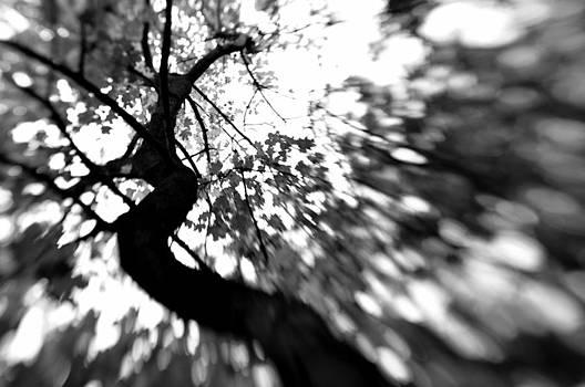Tree of Life by Reka Lendvai