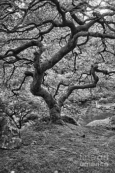 Tree of Life by Stephanie Haertling