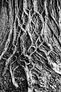 Tree of Life by Tingy Wende
