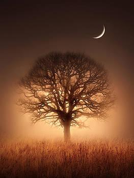 Tree of Light by Jennifer Woodward