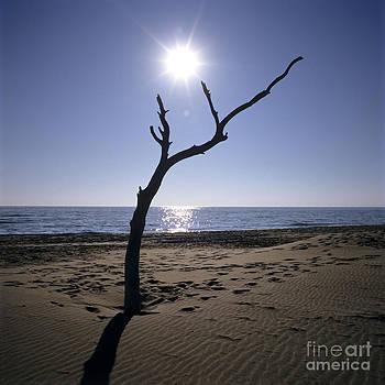 BERNARD JAUBERT - Tree on a beach