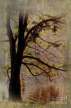 Dan Carmichael - Tree on Abbotts Lake LD
