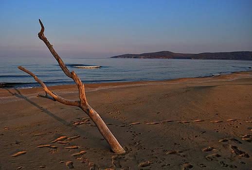 Tree on the Beach by Dimitar Rusev