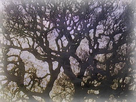 Tree by Philip White