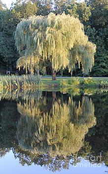 Adrienne Franklin - Tree Reflection