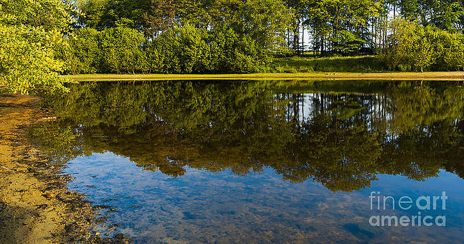 Svetlana Sewell - Tree Reflections
