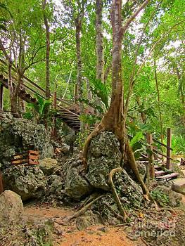 John Malone - Tree Roots on Rock