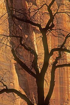 Tree Silhouette Against Sandstone Walls by Judi Baker