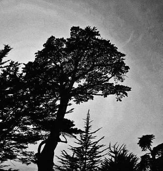 Tree Silhouette in Santa Barbara by Gia Marie Houck