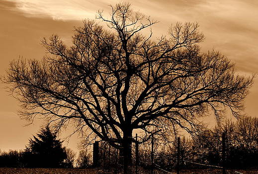 Tree Silhouette by SW Johnson