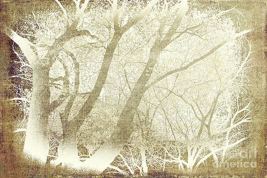 Dan Carmichael - Tree Silhouettes