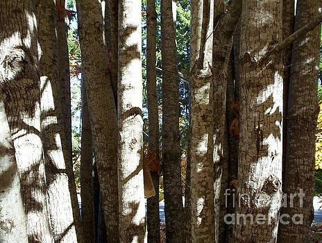 Tree Soldiers by Doreen Lambert